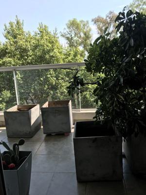 Planta tipo arbusto y macetas