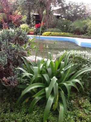 JARDINERO se ofrece para realizar tareas de jardin