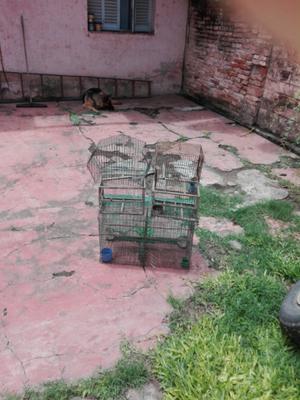 Vendo o permuto lote de jaula en buen estado