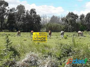 VENDO EXCELENTES LOTES. FRACCIONES DE MÁS DE 10.000 MTS.