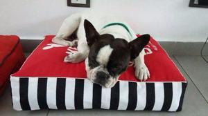 Almohadones Para Mascotas