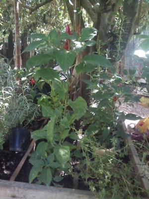 Plantas kokedamas aromaticas interior exterior posot class for Plantas aromaticas de interior