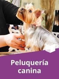 Manual De Peluquería Canina Cocker Spaniel Fox Terrier
