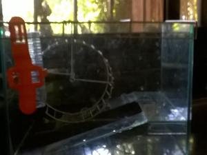 Bola y jaula de vidrio con bebedero y rueda para girar