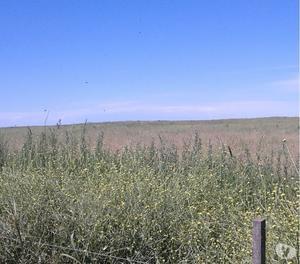 liquido campo agricola ganadero