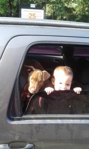 Vendo cachorra pitbull de 4 meses