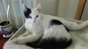 Gatito macho se da en adopcion responsable