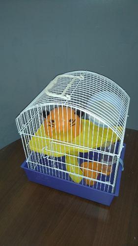 Hamstera Con Casa, Rueda, Comedero Y Bebedero.