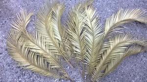 10 hojas de Cica para decoración (Gral paz y Rivadavia)