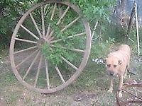 vendo rueda de zulky excelente estado, siempre bajo techo.