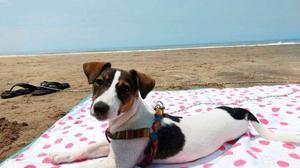 Lona Impermeable Ideal Para Bebes, niños y perros.
