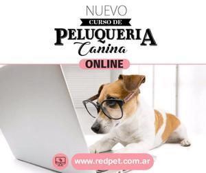 Curso On Line Peluqueria Canina