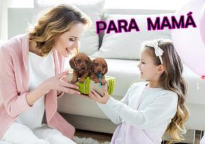 SALCHICHA MINI PARA EL DIA DE LA MADRE!! TARJETAS/ENVIOS