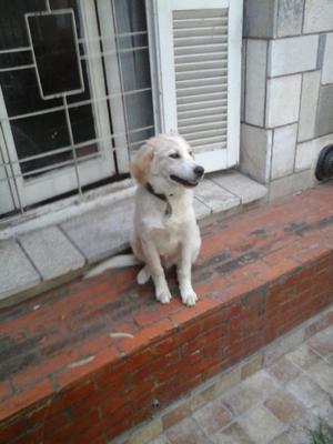 Vendo hermoso cachorro macho 5 meses