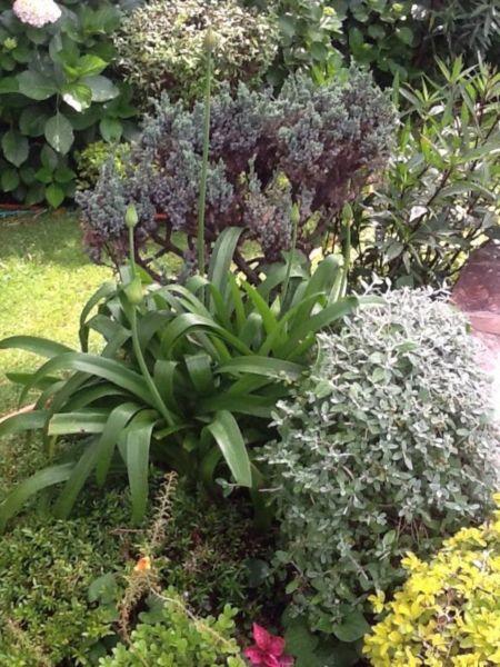 Servicio De Jardineria A Domicilio, Jardinero Profesional