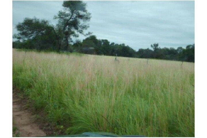 Las Lomitas: Campo ganadero 2743 has en Venta en Las