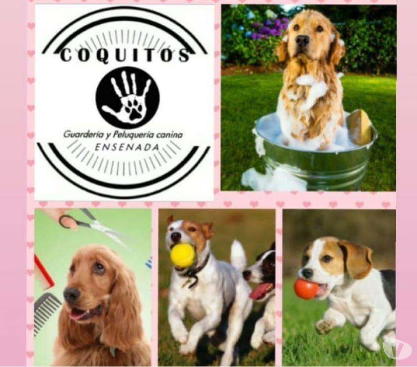 Guarderia y peluqueria canina