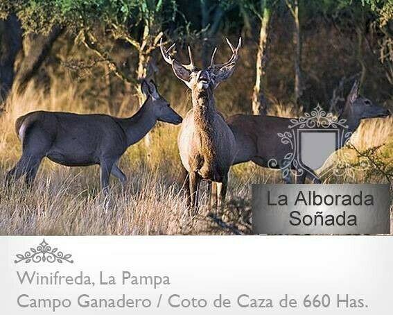 Venta De Exc.campo Con Coto De Caza En Winifreda. Argentina!