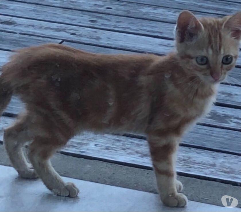 Doy gatitos en adopción! Soy de pilar y los rescate!