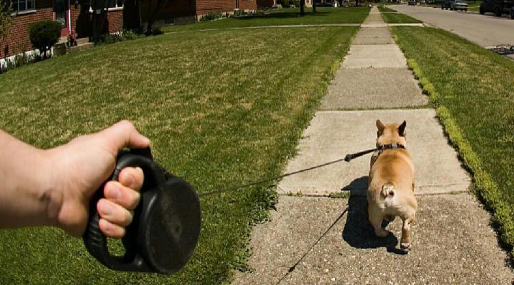 Paseador de Perros Individual