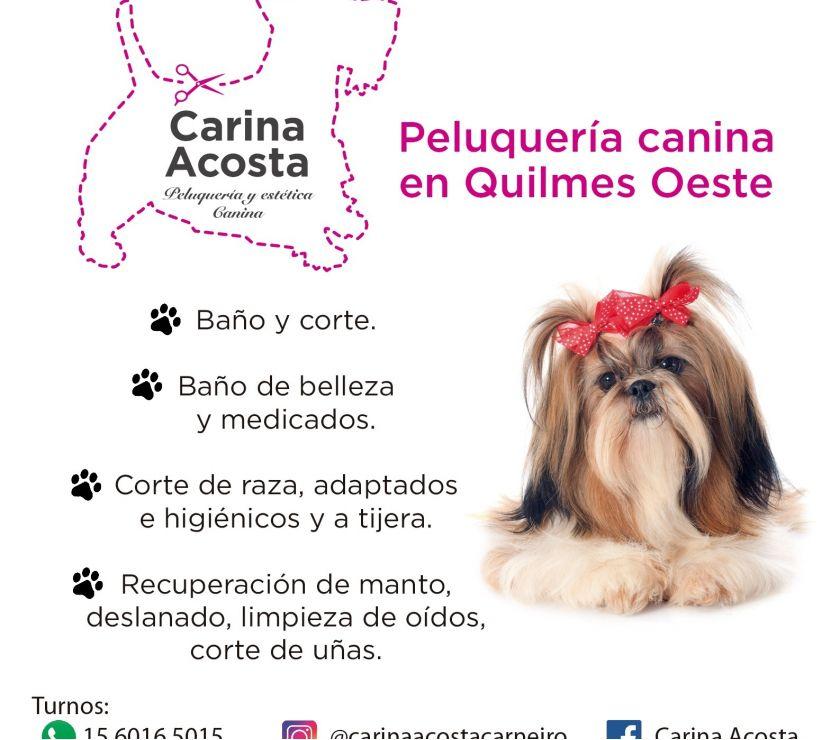 Servicio peluqueria y estetica Canina