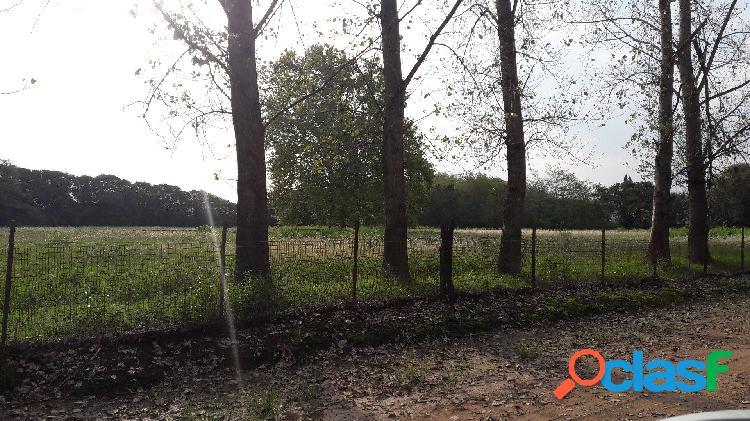 Venta de chacra de 2 hectáreas a 500 mts de Ruta 5.
