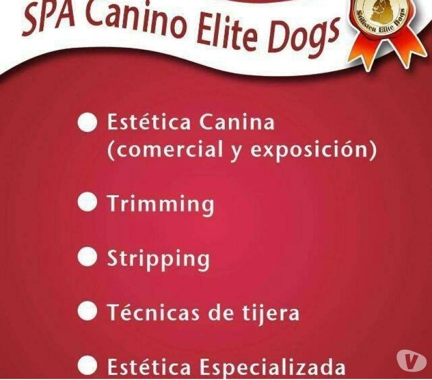 Servicio Profesional de Estética Canina