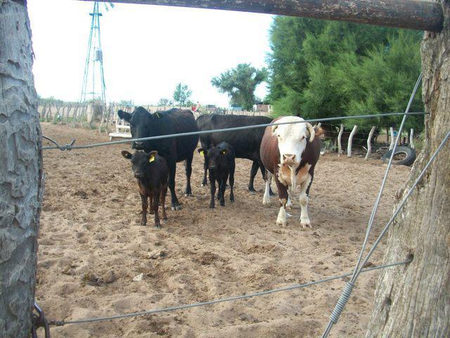 Vendo Campo En General Alvear, Mendoza