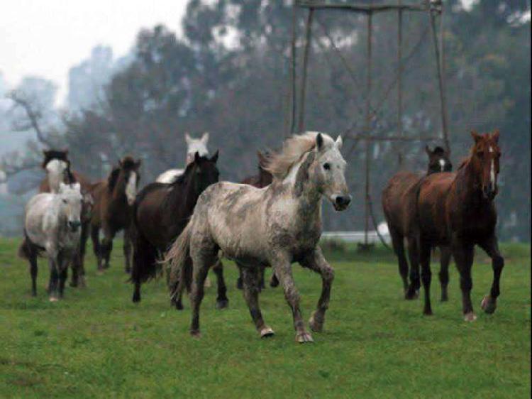 Club de campo - nautica caballos - Casa a estrenar - con