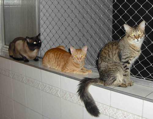 Redes De Proteccion,blanca, Negra Y Transparente, Gatos