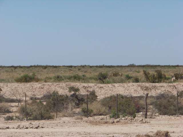 Alquiler a % campo en la frontera san juan-mendoza en