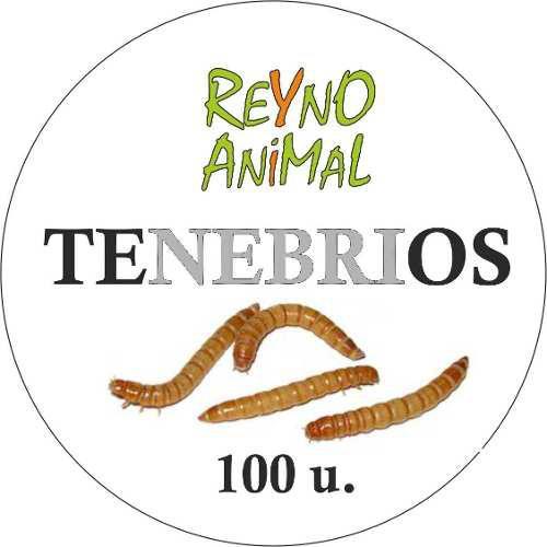 Tenebrios Por 100 U Alimento Vivo Para Reptiles
