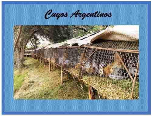 Cuidado De Cobayos Y Conejos. Guarderia