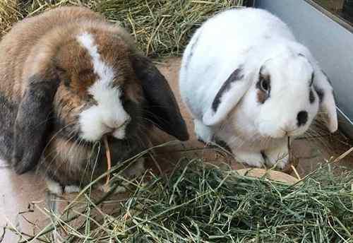 Heno De Pastura 3 Kg. Para Conejos, Cobayos Y Chinchillas