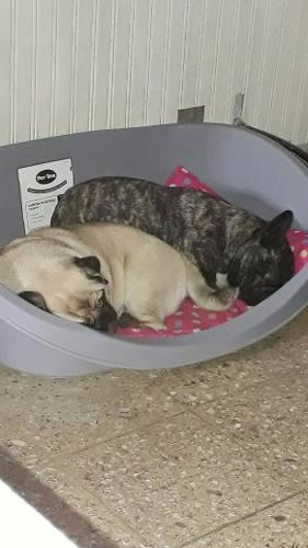 Camita/moises Para Perros Y Gatos Mediana