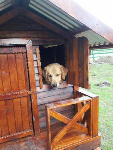 Casita De Madera Para Exterior - Cucha Para Perro
