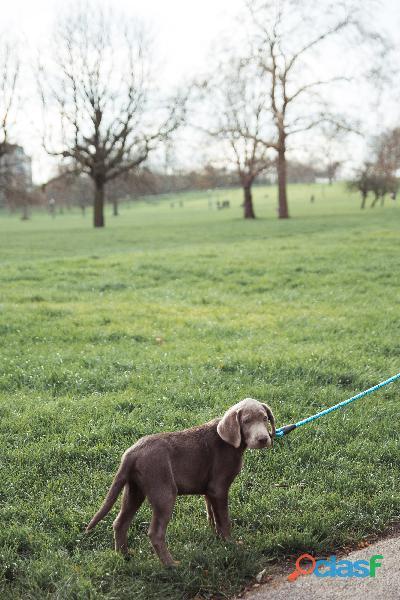 Paseador de perros en City Bell La plata