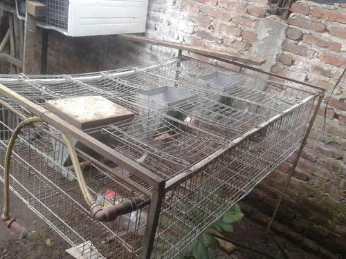 Vendo Jaula Para Conejos Con Tolvas Y Chupetes Para El Agua