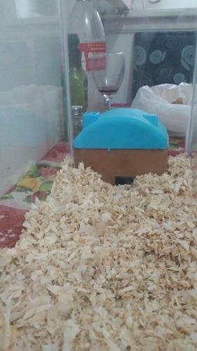 Kit Hamstera + Hamster Sirio O Ruso + Aserrin + Alimento.