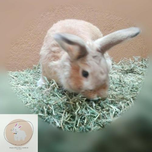 Heno De Alfalfa Para Conejos, Cobayos Y Chinchillas 2 Kilos