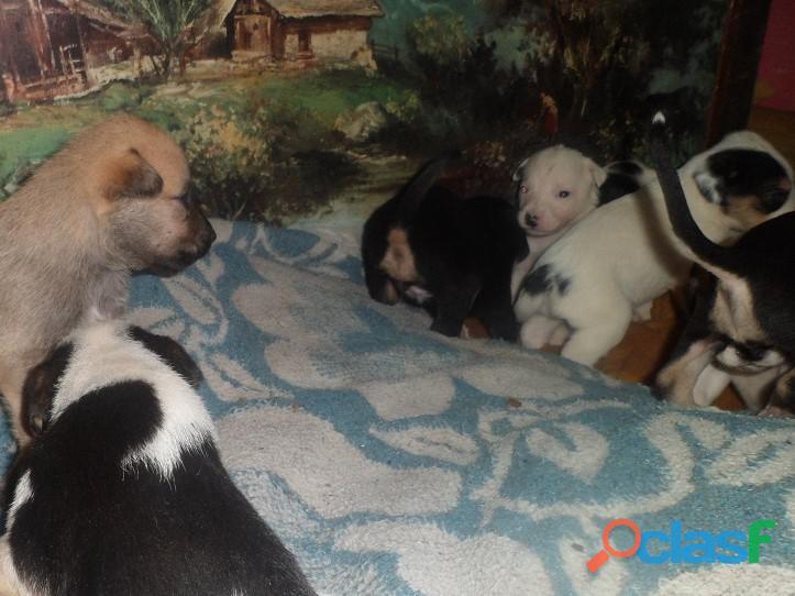 Adoptar perritos en La Plata / Adoptar cachorritos en La