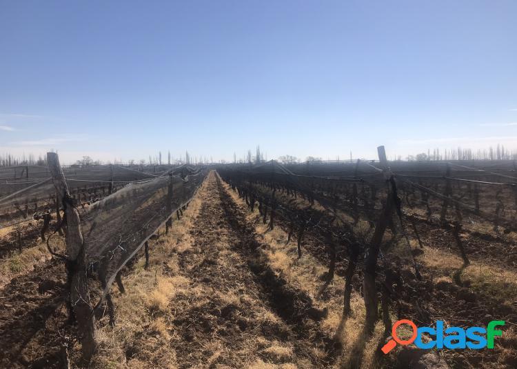 Finca de 10 hectáreas con viñedos y ciruelas Oportunidad!